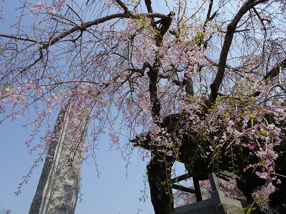 了専寺への春の訪れ
